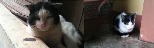 kucing mirip
